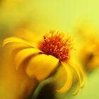Sunshine by Donna-R