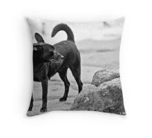 Stray Dog 1 Throw Pillow