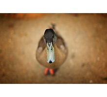 Depth Of Field Duck Photographic Print