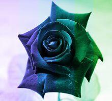 Spring Rose by Igor Shrayer