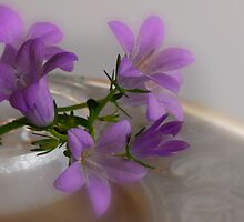 Campanula by Heather Thorsen