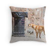 Stray Dog 4 Throw Pillow