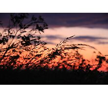 Silhouettes in the wind Photographic Print