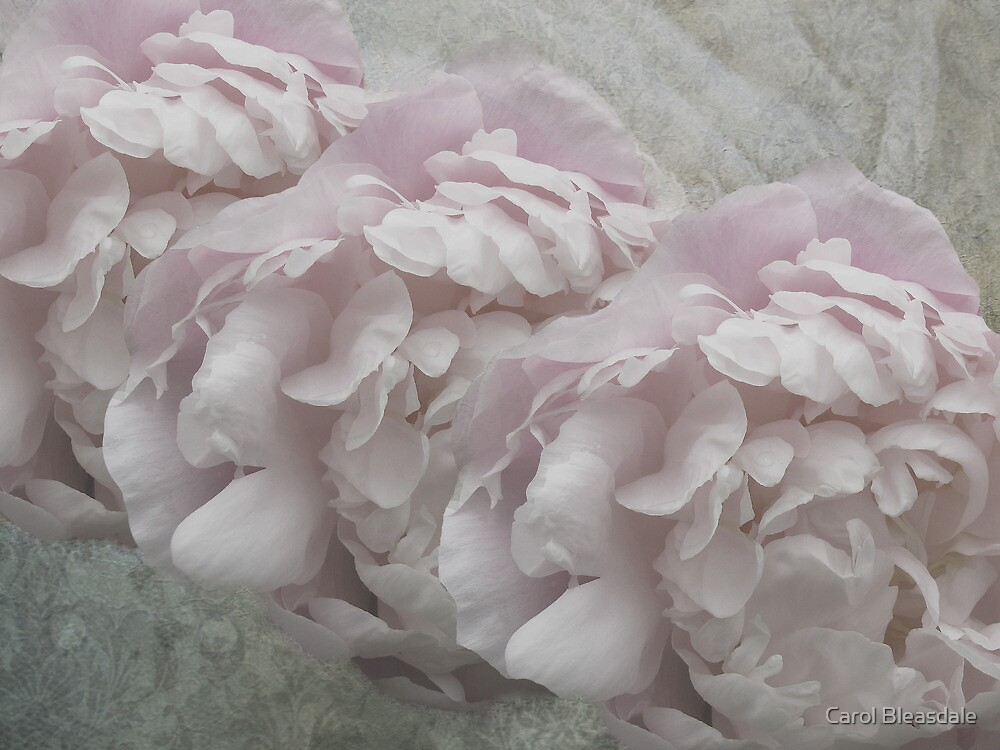 Petals and Lace by Carol Bleasdale