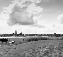 Cows on the floodplains of the River Waal, The Netherlands by M. van Oostrum