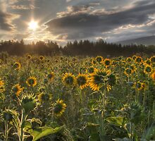 Good Day Sunshine by Lori Deiter