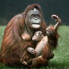 Orangutan Mother and Baby by Patricia Jacobs CPAGB
