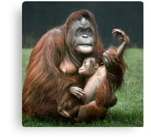 Orangutan Mother and Baby Canvas Print