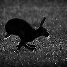Hare Silhouette by Patricia Jacobs DPAGB LRPS BPE4