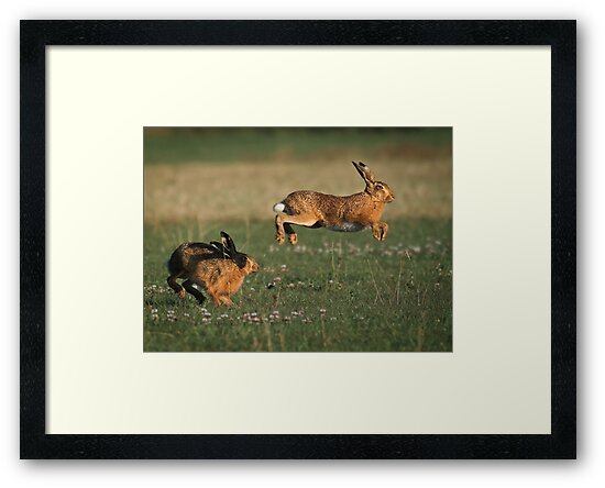 Hare Chase by Patricia Jacobs DPAGB LRPS BPE4