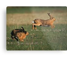Hare Chase Metal Print