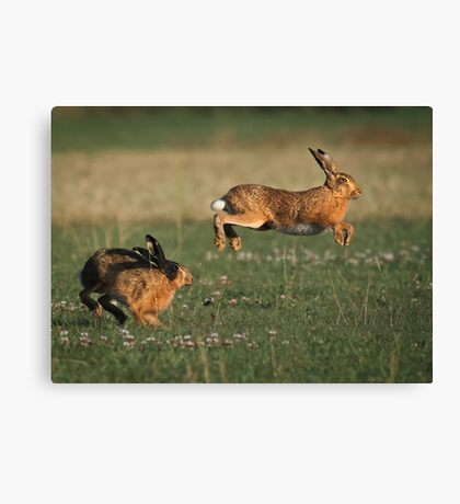 Hare Chase Canvas Print