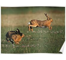 Hare Chase Poster