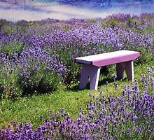 Sitting amongst the Lavender by Amanda White