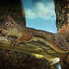 The Nutcracker Sleep by Amanda White