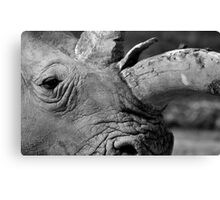 Rhino thoughts Canvas Print