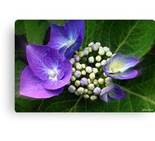 Bouquet of Buds Canvas Print