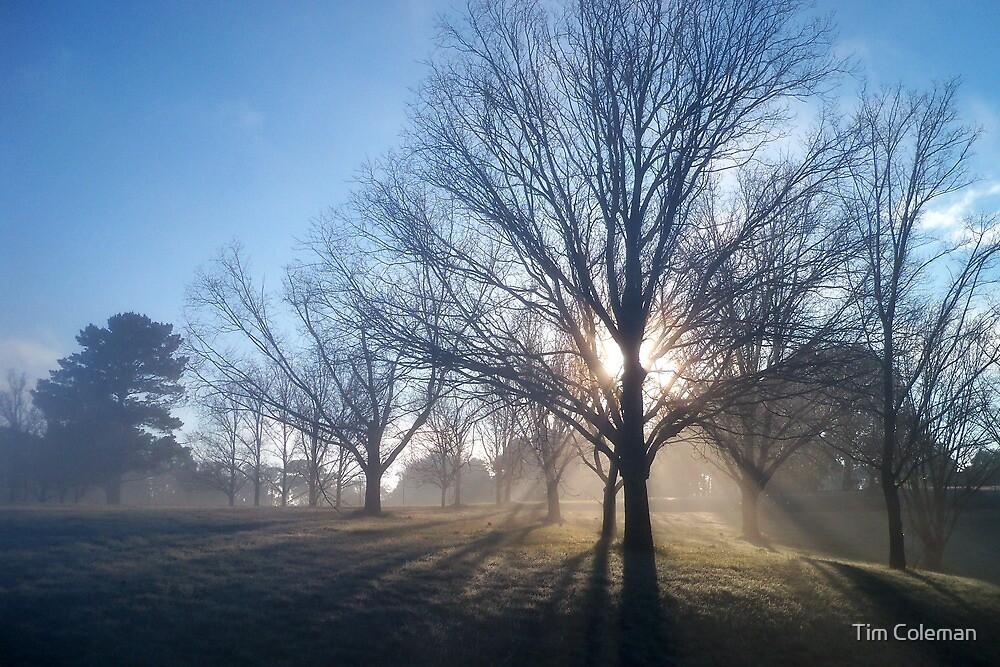 Breaking Fog by Tim Coleman