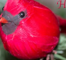 Red Robin Happy Holidays  Sticker