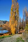 Path Beside the Clutha River by Christine Smith