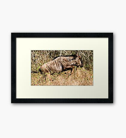 I May Not Be Pretty, But I Can Run ! Framed Print