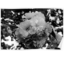 PLEASE VIEW LARGE -Cherry Blossom Tree in B&W   ^ Poster