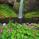 Moffett Falls II by Tula Top