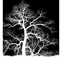 Lightning Tree Photographic Print
