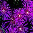 Flower Works by Judi Taylor