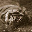 Its Sleep Time! by photoj