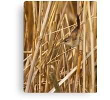 Marsh Ninja Canvas Print