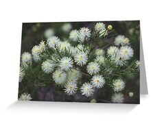 Melaleuca nodosa Greeting Card
