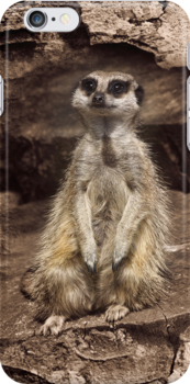 Meerkat iPhone Case by Country  Pursuits
