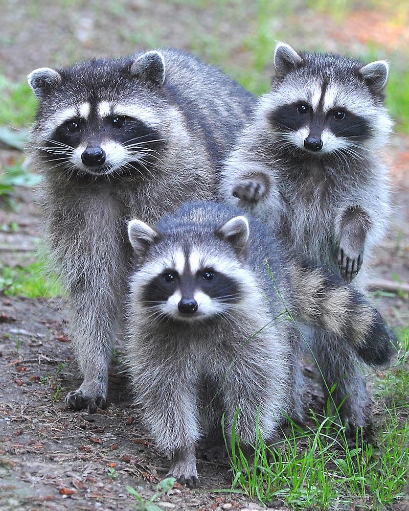 Family Portrait by Carl Olsen
