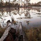 Tahbilk Wetlands_036 by nealbrey