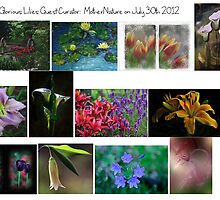 All Glorious Lilies Features July 30 2012 by Marilyn Cornwell