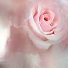 Pink Rose by Anivad - Davina Nicholas