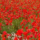 Poppy Field 1 by John Evans
