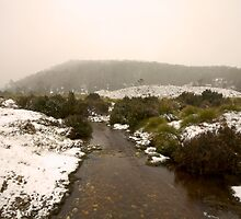 Lilla Creek @ Cradle Mountain by studiojunkyard