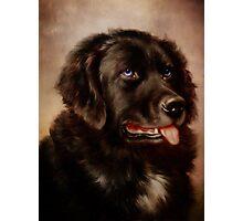 Canine Attachment Photographic Print