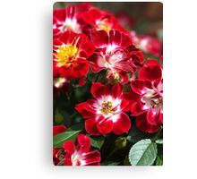 Carpet Rose Red Canvas Print