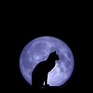 Black Cat Blue moon by Vicki Field