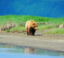 Alaskan Brown Bear by wildphotos