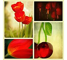 Nature in Red Photographic Print