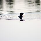 Loon by weswahl