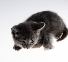 grey kitty by ratto