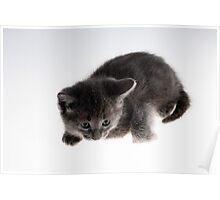 grey kitty Poster