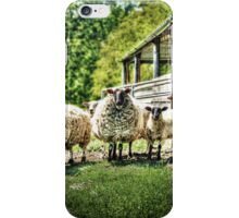 Sheep on the farm iPhone Case/Skin