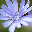 A Soft Blue by Seth LaGrange