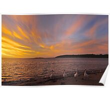 Pelican sunset in Coffin Bay Poster